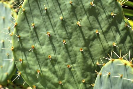 Beautiful floral background with cactus plants close up view