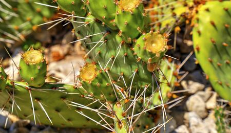 Beautiful view with cactus plants close up Stock Photo