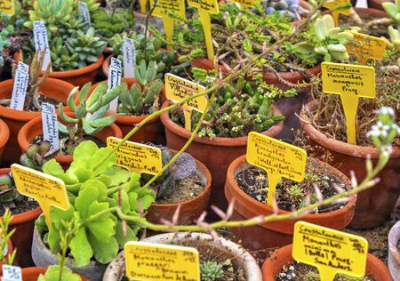 Beautiful view with variety of plants in pots and labels with their names
