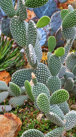 Beautiful view with cactus plants in the botanical garden Stock Photo