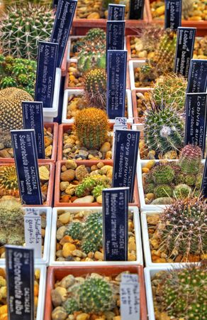 Beautiful view with variety of cactus plants in pots and labels with their names