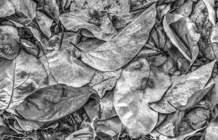 A background of dried autumn leaf in black and white