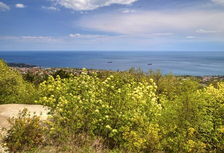 Beautiful landscape with blue sky, sea and fresh green forest