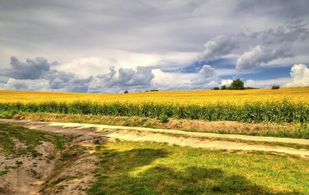 Beautiful landscape with blue sky and fresh yellow agricultural field