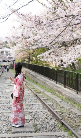 Japanese girl in traditional dress called yukata with Sakura blossom Stock Photo