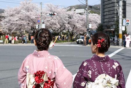 Japanese girl in traditional dress called Kimono with Sakura blossom