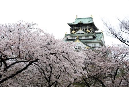 Castello di Osaka con sakura fiore a Osaka, in Giappone Archivio Fotografico - 19598617