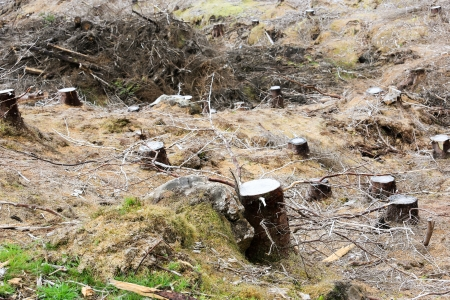 Tree stump remains from deforestation in Scotland, UK, Europe Archivio Fotografico
