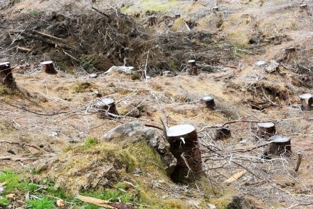 deforestacion: Tocón de árbol sigue siendo de la deforestación en Escocia, Reino Unido, Europa Foto de archivo