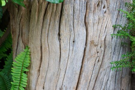 Old wood texture with leaf Stock Photo