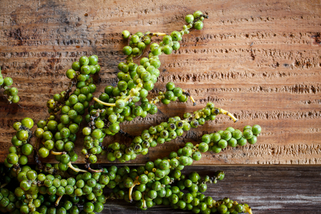 piper: green pepper (Piper Nigrum) on white wood