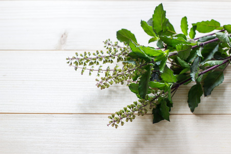Holy Basil, Ocimum sanctum of Thai on a wooden table background Stock Photo