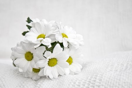 A small bouquet of white daisies on a white cloth