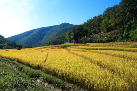 Rice field with cottage hill and blue sky Stock Photo - 9325278