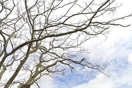 Dry tree under sky  photo