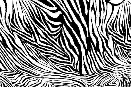 Zebra texture fabric style. photo