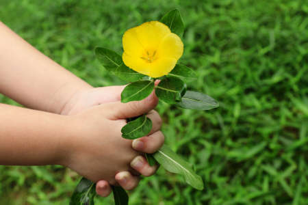 child hand giving a flower photo
