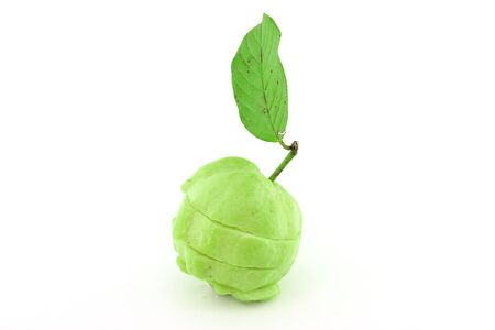 Guavas with leave Stock Photo - 10181141