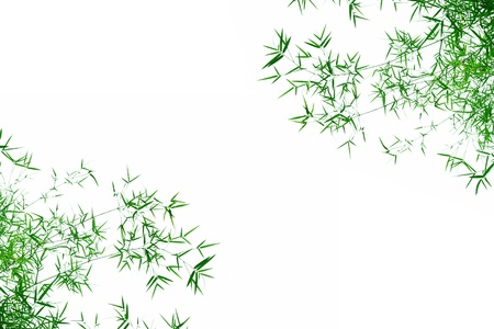 bamboo border: Bamboo leaves isolated on white