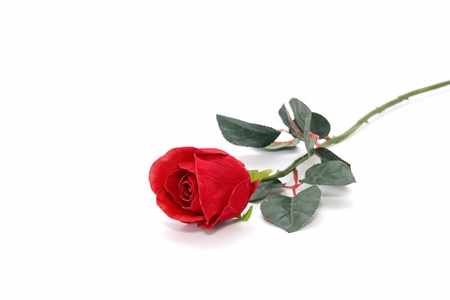 rose stem: Beautiful Red rose on isolated white background  Stock Photo
