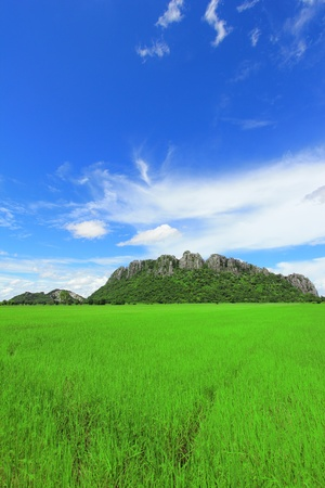 Green rice field under the blue sky in Thailand Stock Photo - 10398919