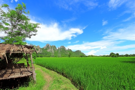Green rice field with old cottage under the blue sky in Thailand