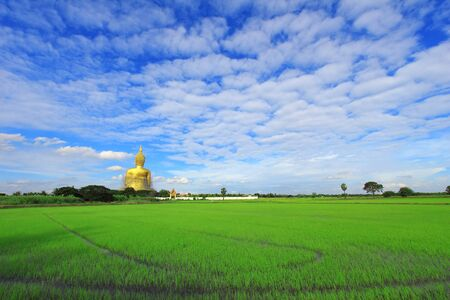 Back buddha with rice field front view photo