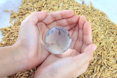 globe on hand with rice background photo