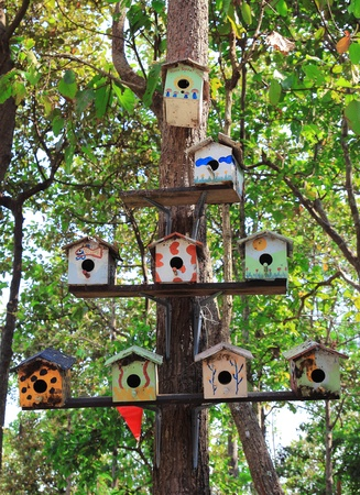 bird nest: The Wooden of birdhouse family on tree