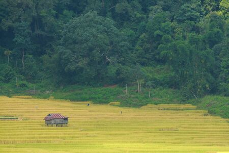 Paddy rice field in the fog Stock Photo - 11647418