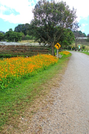 Road curves with flower and road sign photo