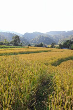 paddy field in northern of Thailand, Chaingmai Stock Photo - 11647579