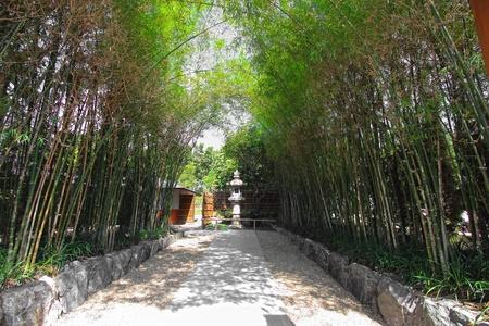 japones bambu: La pasarela de bambú carretera estilo japón Foto de archivo