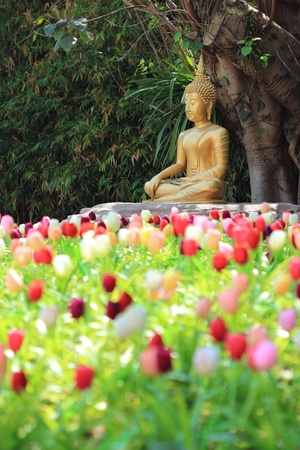 buddha statue with tulip foreground photo