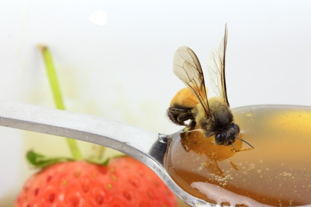 Bee eating honey on spoon with strawberry background photo