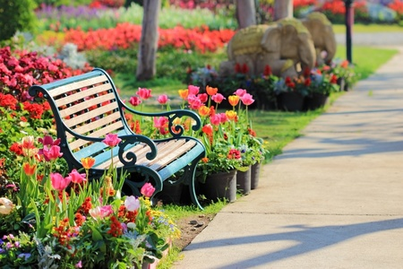 Vintage Bench in tulips garden photo
