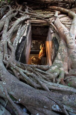 Buddha looked through the window with old root bodhi tree  photo
