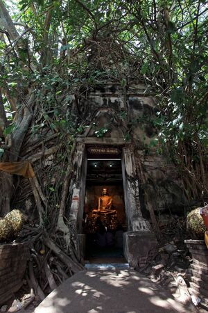 Buddha looked through the door with old root bodhi tree photo