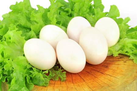 lettuce and egg on the wood photo