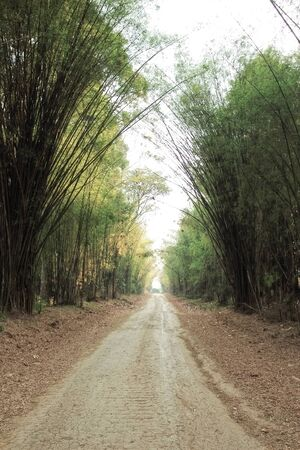 Rural road in bamboo forest photo