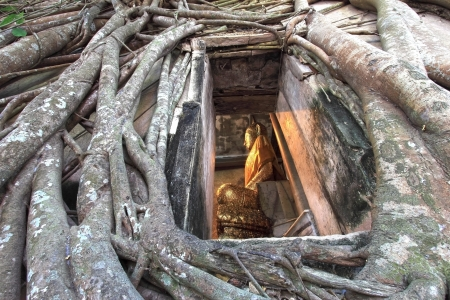 looked: Buddha looked through the window with old root bodhi tree