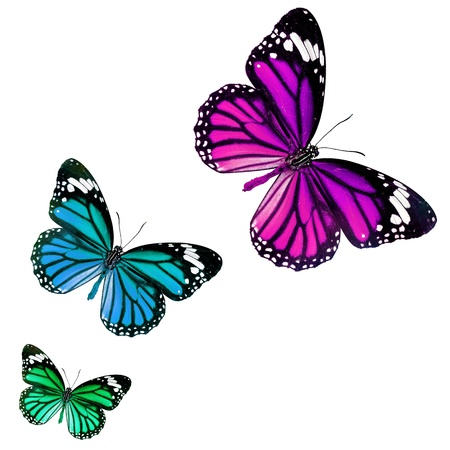 butterfly isolated on white background Stock Photo - 14532237