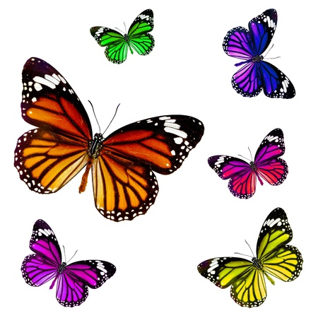 butterflies flying: mariposas sobre fondo blanco