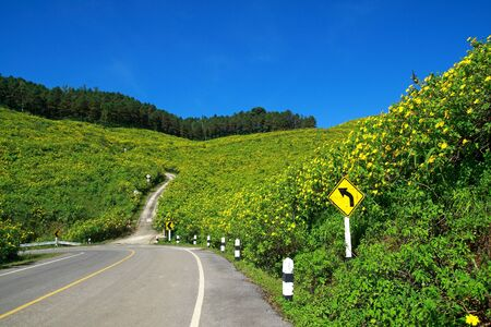 mountain of mexican sunflower and road photo