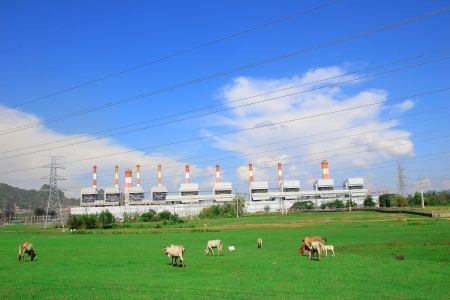 Coal power plant with cow