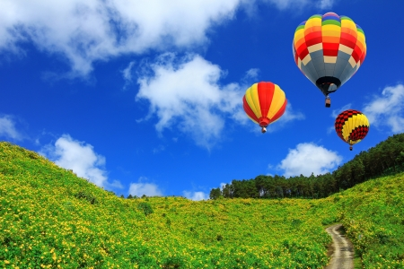 magnificent: hot air balloon on Yellow flower field Tung Bua Tong  Mexican sunflower weed valley  in Maehongson, Thailand