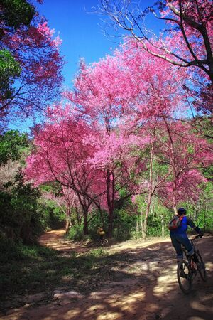 Bike riding in a wonderful nature photo