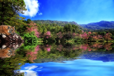 Cherry blossom and lake with tiger Stock Photo - 17487037