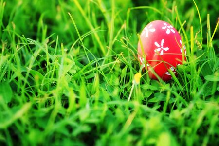 easter egg on green grass  photo