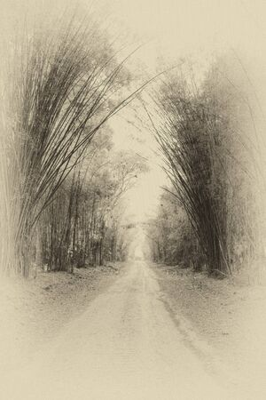 Antique rural road in bamboo forest photo